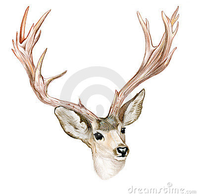 Buck with horns