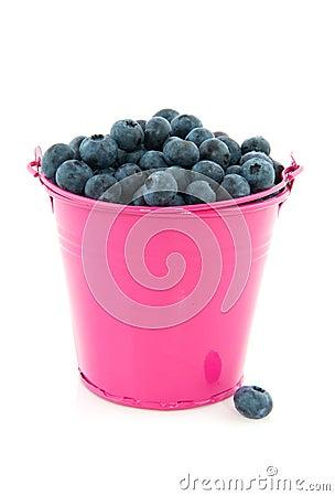 Bucket blueberries