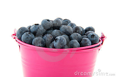 Bucket blueberries