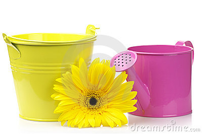 Bucket, watering can and gerbera