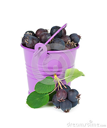 Free Bucket With Berries Royalty Free Stock Image - 31780526