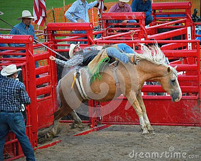 Bucking Horse with Cowboy Coming Out of Gate