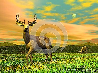 Bucks in ntaure - 3D render