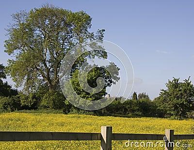 Bucolic Countryside