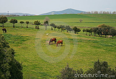 Bucolic landscape
