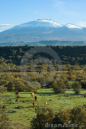 Bucolic Landscape And Volcano Etna
