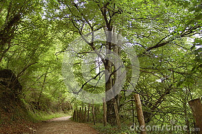 A bucolic path in the forest
