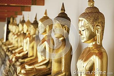 Budas dourado