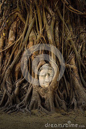 Buddha Face in Tree