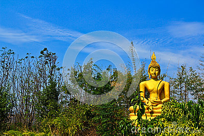 Buddha in the forest