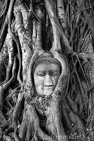 Buddha head. Ayyuthaya. Thailand