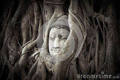 Buddha Head Hidden In The Tree Roots Stock Photo - Image ...