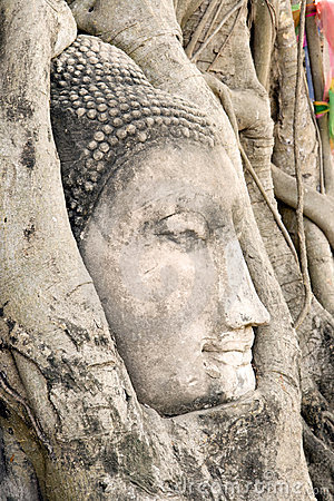 Free Buddha Head In Tree Roots Royalty Free Stock Images - 1835609