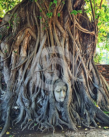 Free Buddha Head In Tree Roots Royalty Free Stock Photography - 98128377