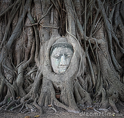 Free Buddha Head In Tree Roots At Wat Mahathat, Ayutthaya, Thailand. Royalty Free Stock Photography - 35961877