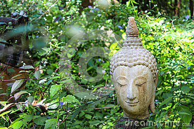 Buddha head statue with nature