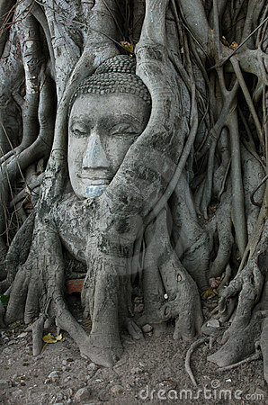 Free Buddha Head Surrounded By Roots Stock Photo - 478020