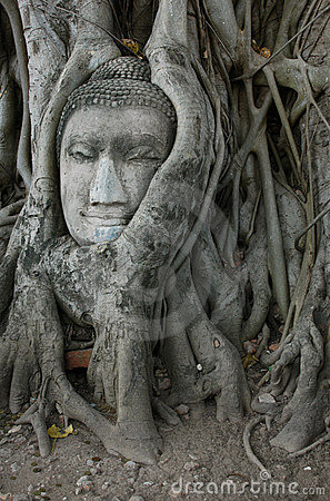 Buddha Head Surrounded By Roots Stock Photos - Image: 479633