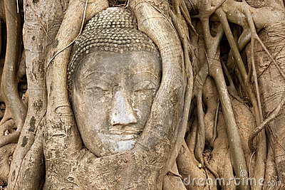 Buddha head in vines