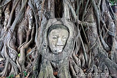 Buddha s head in banyan tree roots, ayuthaya