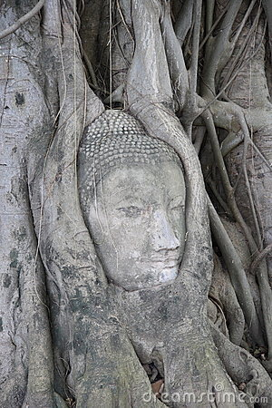 Buddha s head in roots