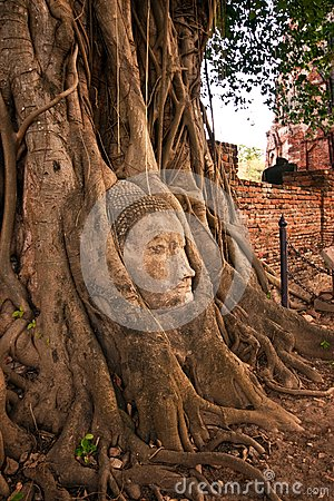 Buddha s head in the tree