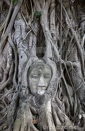Buddha statue with roots surround, Thailand