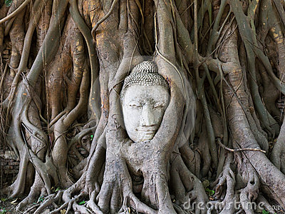 Buddha statue in the roots of tree
