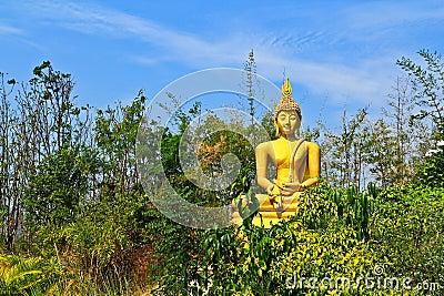 Buddha w lesie