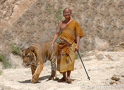 Buddhist monk walking with bengal tiger,thailand Editorial Photography