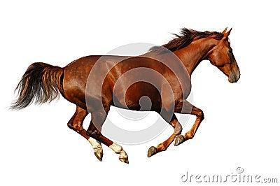 Budenny疾驰马