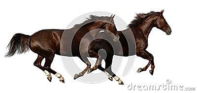 Budenny gallop koni