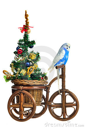 Free Budgerigar Carrying New Year Tree On The Tricycle Royalty Free Stock Images - 21910969