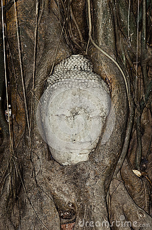 Budhas head gripped by tree roots