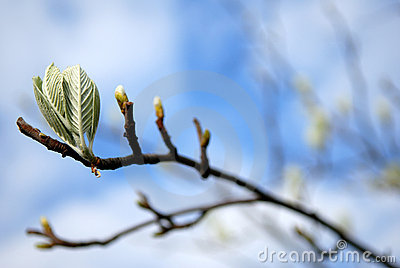 Buds on branch.