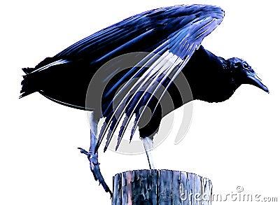 Bue bird