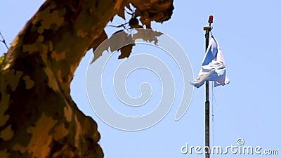 buenos Аргентины aires Аргентинский флаг двигает на ветер акции видеоматериалы