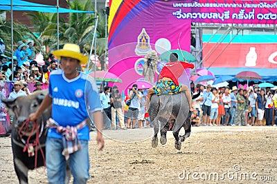 Buffalo Racing Festival Editorial Photo
