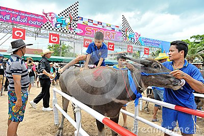 Buffalo Racing Festival Editorial Image