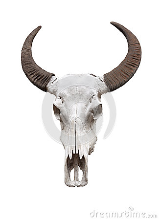 Free Buffalo Skull Royalty Free Stock Photos - 24998888