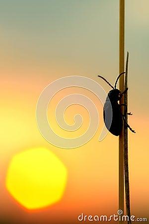 Free Bug Stock Image - 11002351