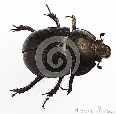 Free Bug Royalty Free Stock Photo - 845045