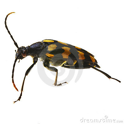 Free Bug Royalty Free Stock Images - 845049