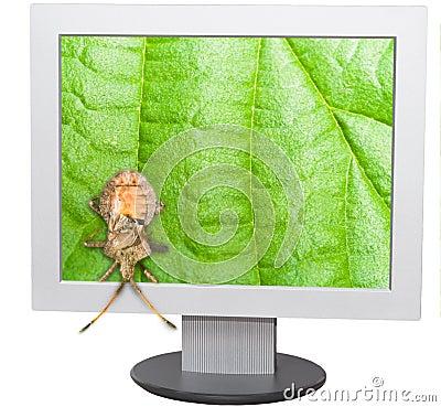 Bug and computer screen