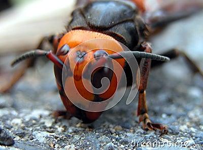 Bug face