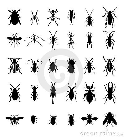 Bug insect silhouettes