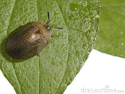 Bug on a plant