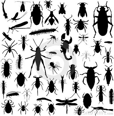 Free Bug Silhouettes Royalty Free Stock Photography - 3817937