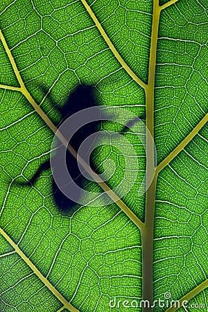 Bug stay on leaf