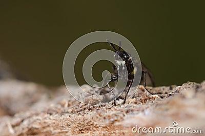 Bug on a stone